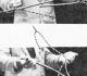 Įrašo paveikslėlis